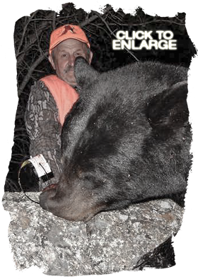 Trophy Bear Hunting in Canada