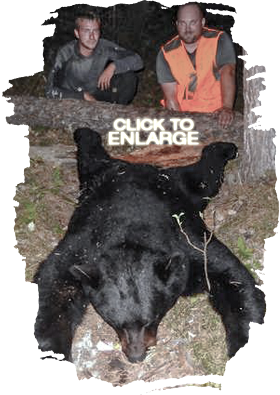 Trophy Black Bear Hunts
