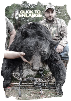 Trophy Bear Hunting in Ontario