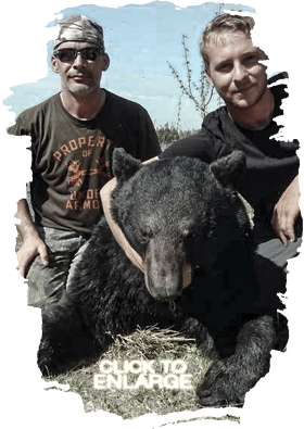 Trophy Bear Hunting in Vermilion Bay Area