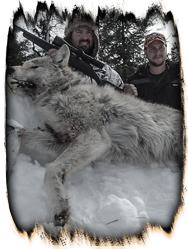 Winter Wolf Hunt